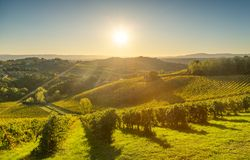 Panoramic view of countryside and chianti vineyards from San Gim Royalty Free Stock Images
