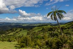 Panoramic view of countryside with palm tree, North Island, New Zealand royalty free stock image
