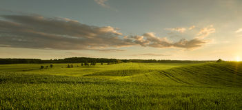 Panoramic view of empty grass field Stock Photography