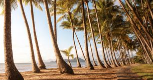 Panoramic view of an empty tropical beach royalty free stock photography