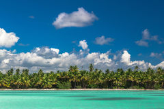 Panoramic view of Exotic Palm trees and lagoon on the tropical Island beach.  Stock Image