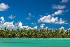 Panoramic view of Exotic Palm trees and lagoon on the tropical Island beach Stock Image