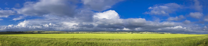 Panoramic View of Field Royalty Free Stock Image