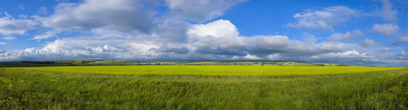 Panoramic View of Field Stock Photo