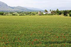 Panoramic view on fields close to Alcúdia, in Mallorca. Panoramic view on fields with red poppies located close to Alcudia, in Mallorca. Mountains in the Royalty Free Stock Photography