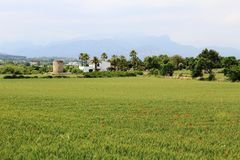 Panoramic view on fields close to Alcúdia, in Mallorca. Panoramic view on fields with red poppies located close to Alcudia, in Mallorca. Mountains in the Stock Images