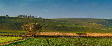Panoramic view of fields on hills Stock Photos