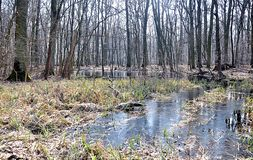Floodplain forest and nature. Panoramic view, floodplain forest and nature stock image