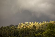 Panoramic view of the a forest in the central Andean mountains royalty free stock images