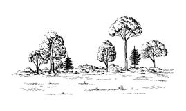 Panoramic view of the forest from coniferous trees. Hand drawn vector illustration Sketch design Royalty Free Stock Images
