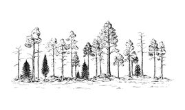 Panoramic view of the forest from different trees. Hand drawn vector illustration Sketch design Royalty Free Stock Image
