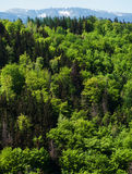 Panoramic View From The Castle Chojnik Stock Images