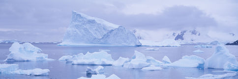 Panoramic view of glaciers and icebergs in Paradise Harbor, Antarctica Royalty Free Stock Photo