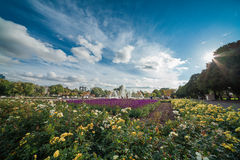 Panoramic view of the Gorky park Stock Photography