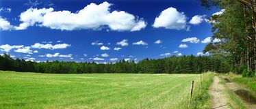 Panoramic view on grass field, forest and a path Royalty Free Stock Image