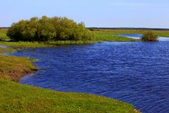 Panoramic view of the wooded meadows and wetlands by the Biebrza river in Poland. Panoramic view of the grassy meadows and wetlands - wildlife and birds reserve Royalty Free Stock Photo