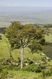 Panoramic view of Great Rift Valley in spring after much rainfall, Kenya, Africa Royalty Free Stock Photography