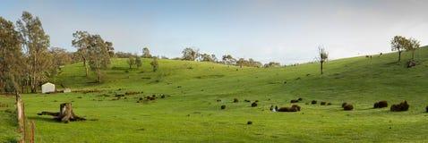 Panoramic view of green farmland Stock Photos