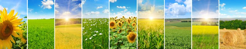 Panoramic view of green field and blue sky with light clouds. Co royalty free stock image