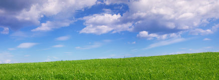 Panoramic view of green summer fields Stock Image