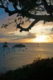 Panoramic view of Gustavia harbour at sunset, branches, three, St Barth, sailboats Royalty Free Stock Photo