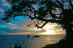 Panoramic view of Gustavia harbour at sunset, branches, three, St Barth, sailboats Stock Image