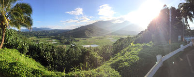 Panoramic view of Hanalei Valley, Kauai. Panoramic view of taro fields located in Hanalei Valley in Kauai, Hawaii. You can see Namolokama Mountain in the Royalty Free Stock Images
