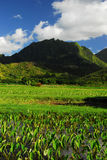 Panoramic view in Hawaii Royalty Free Stock Images