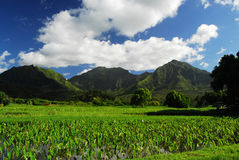 Panoramic view in Hawaii Stock Photography