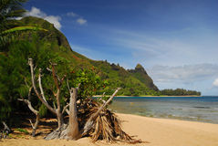 Panoramic view in Hawaii Royalty Free Stock Photos
