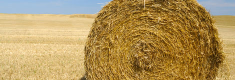 Panoramic view of hay bale Royalty Free Stock Photography