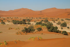 Panoramic view with high dunes in Sossusvlei area Namibia. Nice view of dunes and one Tourist climbing up to dune `Big Mama`. Sossusvlei Area in Namibia Stock Image