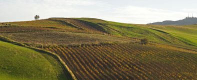 Panoramic view hill. Hill with vineyard in Sicily royalty free stock images