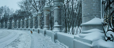 Panoramic view of a hoarfrost fence Stock Image