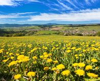 Meadow ful of dandelions and beautiful clouds. Panoramic view of Horni Lidec village with meadow ful of dandelions and beautiful clouds - Carpathiam mountains Stock Photography