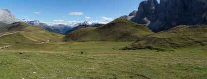 Panoramic view of horse on alp de siusi in the dolmite mountains royalty free stock photography