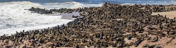 Seals at cape cross in Namibia royalty free stock photography