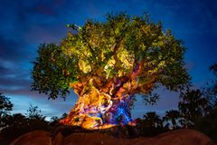 Panoramic view of Illuminated Tree of Life on blue night background at  Animal Kingdom.