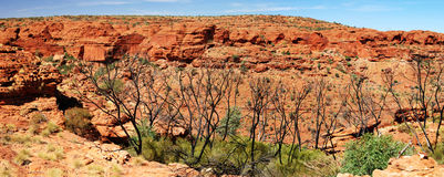 Panoramic view on King's Canyon. A panoramic view of King's Canyon Southern wall, Watarrka National Park, Northern Territories, Australia.  King's Canyon is one Royalty Free Stock Photo