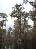 View of Lake Martin, Louisiana. stock photography