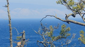 Panoramic view of lake seen through branches. It is beautiful landscape of coast line of deep blue water with strong white waves seen through pines growing up stock video footage