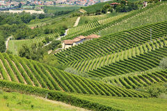 Panoramic view of langhe vineyard Stock Photo