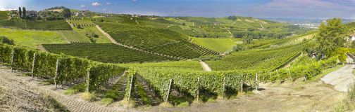 Panoramic view of langhe vineyard Stock Image
