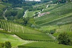 Panoramic view of langhe vineyard Stock Photos
