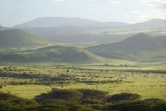Panoramic view of Lewa Wildlife Conservancy after much rain in North Kenya, Africa Royalty Free Stock Image