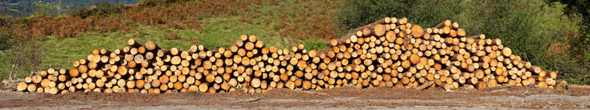 Panoramic view of logs stacked stock images