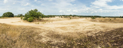 Panoramic view of the Loonse and Drunense sand dunes Stock Photo