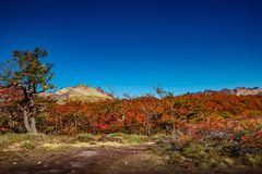 Panoramic view of magical colorful fairytale forest at Tierra del Fuego National Park, Patagonia, Argentina, Autumn time, blue sky. Panoramic view of magical stock photography