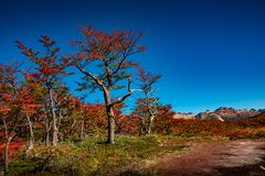 Panoramic view of magical colorful fairytale forest at Tierra del Fuego National Park, Patagonia, Argentina, Autumn time, blue sky. Panoramic view of magical royalty free stock image