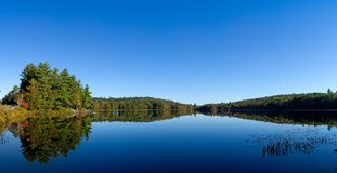 Panoramic view of Maine lake in early fall. Panoramic view of a forest of early fall foliage in the background with water plants in the foreground on Sanborn Royalty Free Stock Image